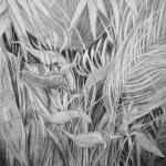 Abbott-Botanic-garden-05