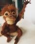 orangutan-WEB