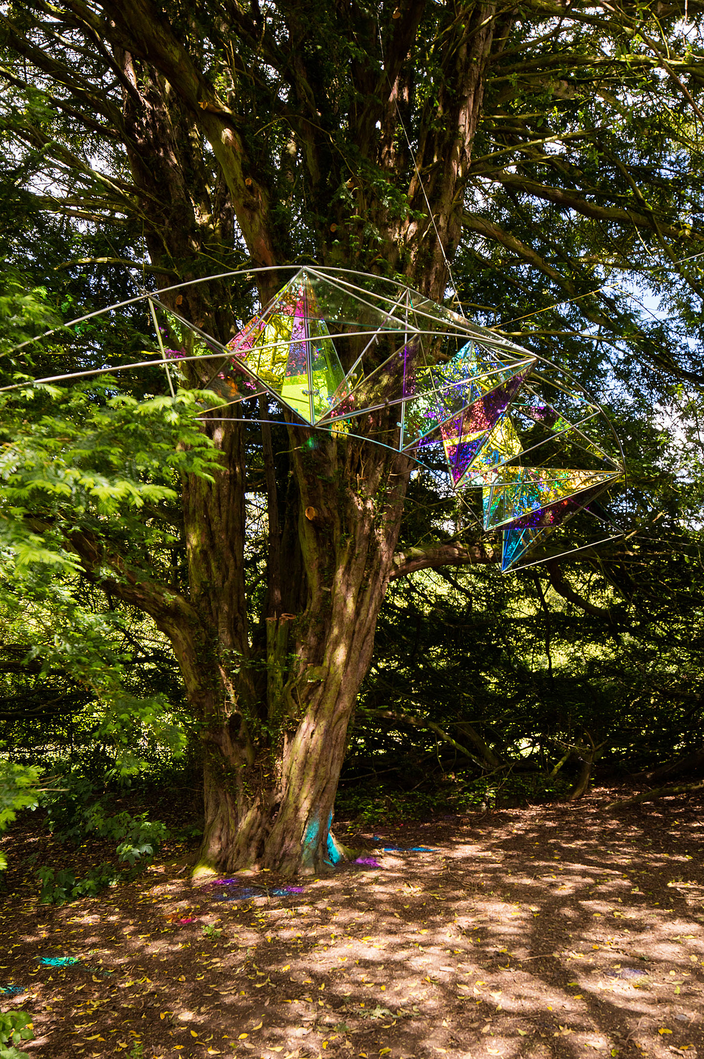 En'Light'en: Taxus Baccata, Cheeseburn Sculpture Park